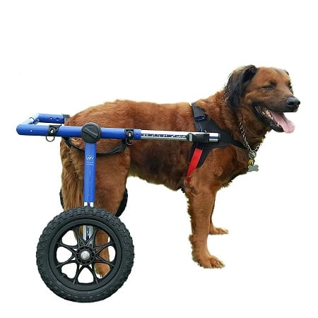 Top 10 Best Wheelchairs for Dog